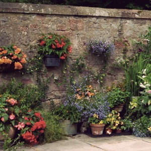 Garden Cont….